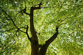 Upper branches of a tree green pattern — Stock Photo