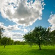 Tree on meadow landscape — Stock Photo