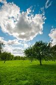 Tree on meadow landscape — Stock Photo