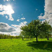 Tree on meadow with bright sun — Stock Photo