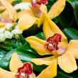 Beautiful yellow orchids bouquet — Stock Photo #9895093