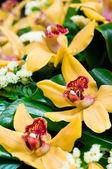 красивые желтые орхидеи букет — Стоковое фото