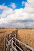Wandelpad in een suikerriet grammomys — Stockfoto