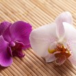 Stock Photo: Blume orchidee natur bambus asien wellness zen blühen
