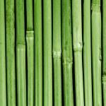 Bambus asien wald china panda umwelt wellness zen — Stock Photo