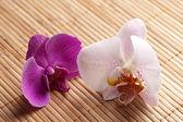 Blume orchidee natur bambus asien wellness zen blühen — Стоковое фото