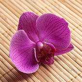 Blume orchidee natur bambus asien wellness zen blühen — Stock Photo