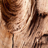 Natrur Baum Holz Struktur Textur Wald Brett Hintergrund Muster — Stock Photo