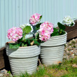 Two pot with flowers outdoor — Stock Photo