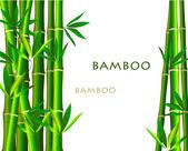 Bamboo on white background — Stock Photo