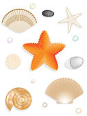 Set of seashells, seastar, stones isolated on white — Stock Photo