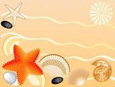 Snäckskal, stenar, seastars på sand bakgrund — Stockfoto