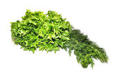 Fresh green lettuce frillice salad and dill — Stock Photo