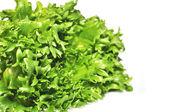 Fresh green lettuce frillice salad — Stock Photo