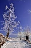 Country road in wintry landscape — Stock Photo