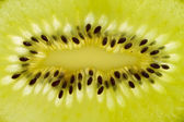 Macro of fresh kiwi fruit — Stock Photo
