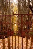 Gate to Autumn Forest — Stock Photo