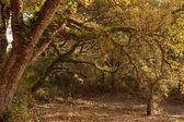 Rural Tree Pattern — Stock Photo