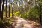 Dirt road trough woods under sunlight, in Portugal — Stock Photo