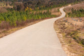 Tarmac road to the top of the hill , surrounded by woods — Stock Photo