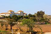 Tuscany vineyard likely — Stock Photo