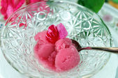 Red Rose Sorbet — Stock Photo
