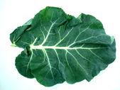 Leaf of a broccoli — Stock Photo