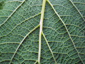 Leaf of a plant close up — Stock Photo