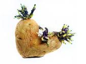 Brotes de patatas — Foto de Stock