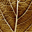 Dry leaf of a plant close up — Stock Photo