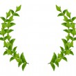 Wreath from Green leaves — Stock Photo #9328878