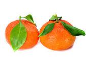 Fresh Tangerine — Stock Photo