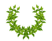 Wreath from Green leaves — Stock Photo