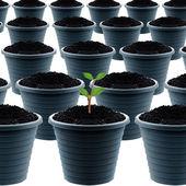 Plastic garden pot — Zdjęcie stockowe