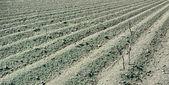 Geploegd grond — Stockfoto