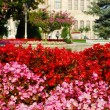 Some flowers with Sultan palace in back ground — Stock Photo