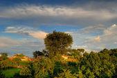 Bacoli tree — Stock Photo