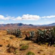 Stock Photo: Cactusus in desolate mountain landscape
