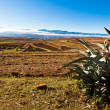 Stock Photo: Desolate mountain landscape with catus in front