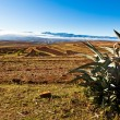 Desolate mountain landscape with catus in front — Stock Photo