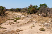 Rocky dry riverbed with trees and bushes — Stock Photo