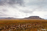 Desolate mountain landscape on a rainy day — Stock Photo