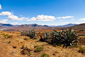 Cactusus in a desolate mountain landscape — Stock Photo