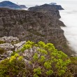 View from table mountain Cape town — Stock Photo