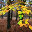 Leaves on a tree in autumn — Stock Photo