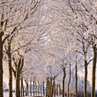 Trees and road in a white winter landscape — Stock Photo #10235568