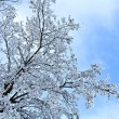 Detail of branches in winter — Stock Photo #10235977