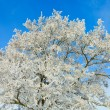 Stock Photo: Detail of treetop in winter
