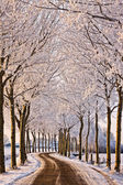 Trees and road in a white winter landscape — Stock Photo