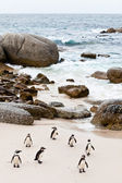 Black-footed african penguins on the beach — Stock Photo